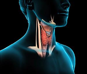 375x321_how_does_your_thyroid_work_video.jpg